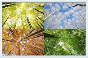 caleidoscoop-seizoenen